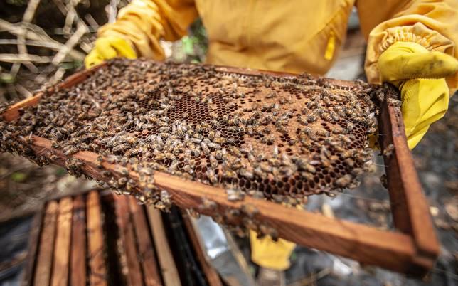laboratori creativi miele api cera